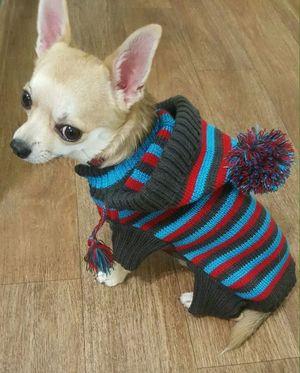 vyazanie_odezhdy_sobak_malyh Вяжем одежду для собак: делаем крючком своими руками