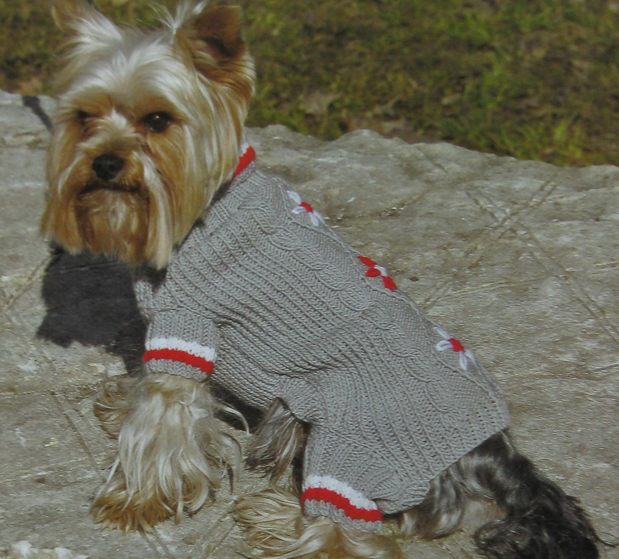 правила и схемы вязания одежды для собак мелких пород спицами