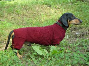 вязаная одежда для собак своими руками как сделать комбинезон или