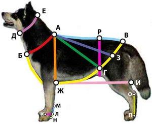 Как сделать шлейку для собаки своими руками